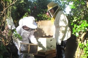 Hive Installation, 2012